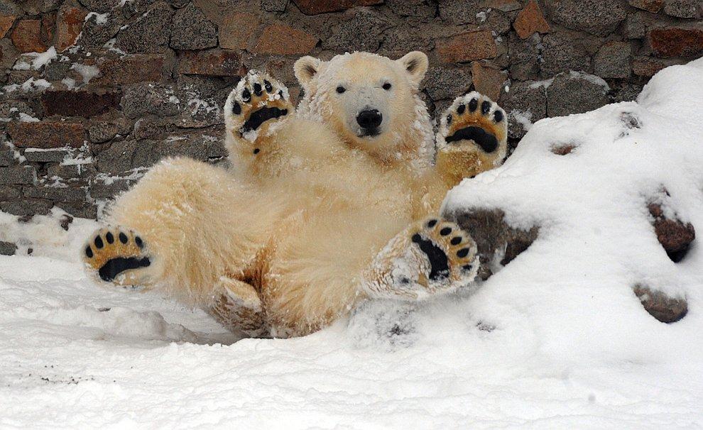 ГК «Ташир» построит зоопарки в столице и Петербурге
