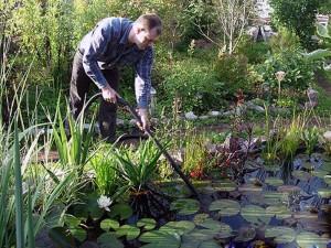 Как самостоятельно провести чистку пруда или небольшого водоема