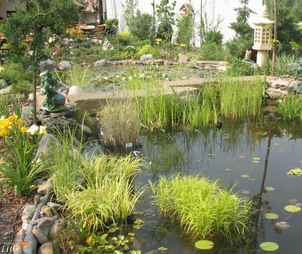 Подбор растений для пруда на даче с учетом принципов зонирования