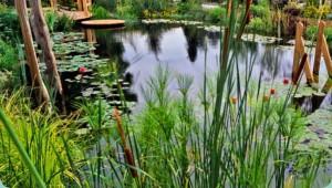 Секреты разведения рыб в искусственных водоемах