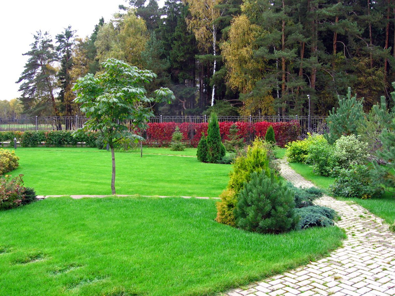 Какой газон выбрать для благоустройства придомовой территории?