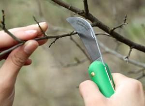 Обрезка, прививка и окулировка: в садоводстве необходимы ножи!