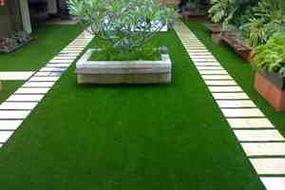 Особенности выбора трав для обустройства газонов