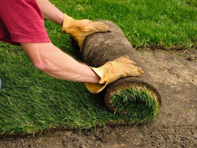 Когда лучше садить газон весной или осенью