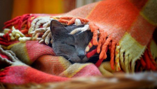 Личное одеяло - это лучший подарок любому человеку